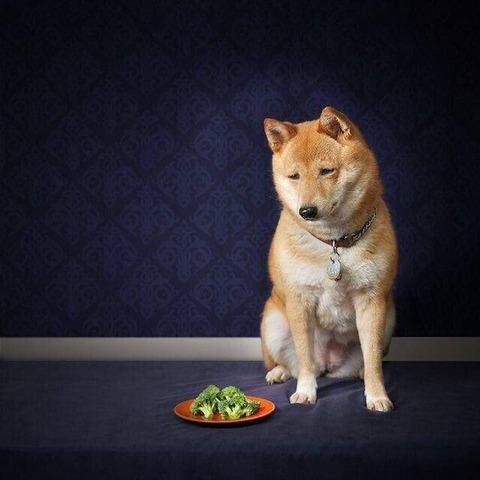 ブロッコリー犬