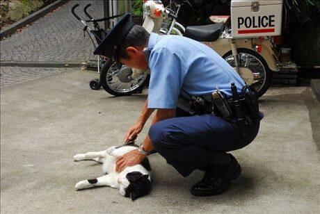 逮捕されたネコ