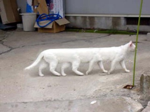猫のリムジン