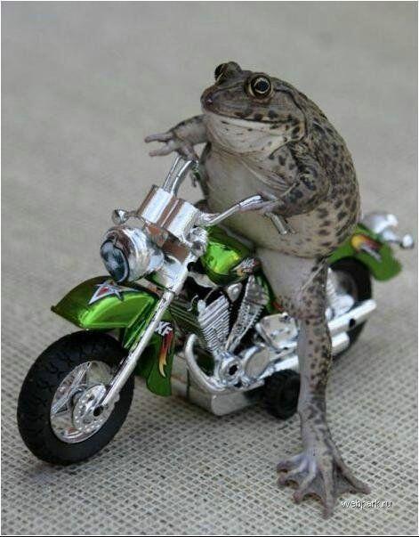 蛙ライダー