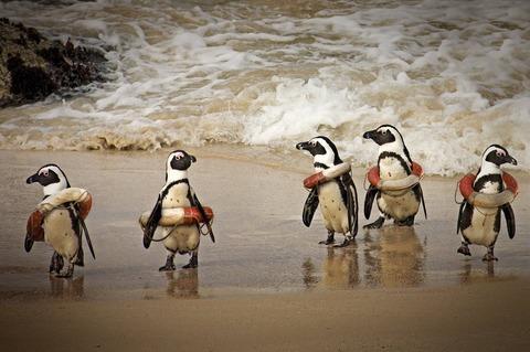 浮き輪ペンギン