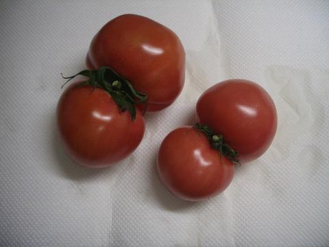 トマトに異変か 2 (1)