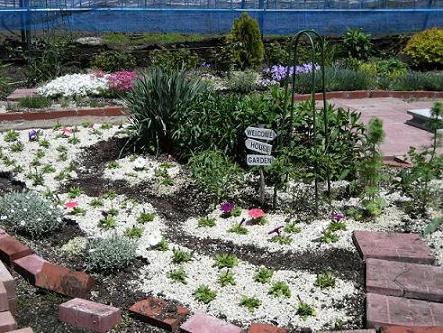 05-1ペチュニア花壇