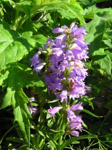 3回目の花