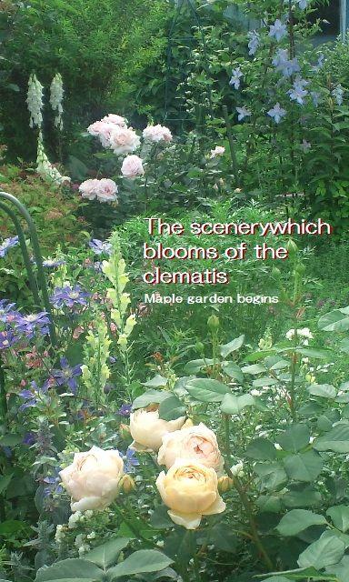 25クレマチスの咲く