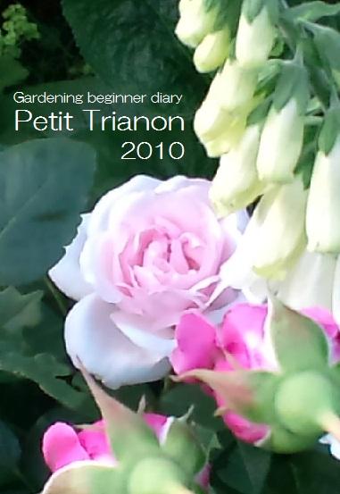 2010プチトリアノン02