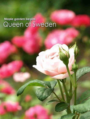 11625スウェーデン