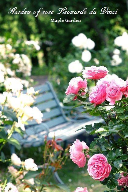 Dダビンチの庭小