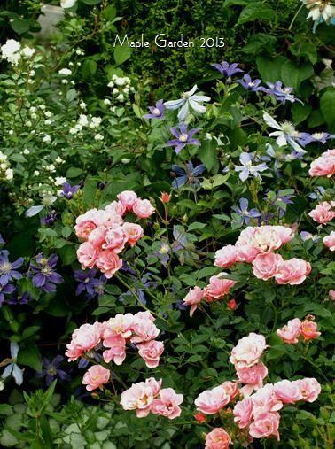 7月の庭0826