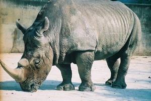 zoo_20080124191306_1