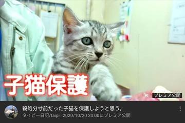 タイピー日記保護猫