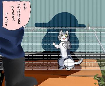 猫ちゃんの命の輝きを見よgato