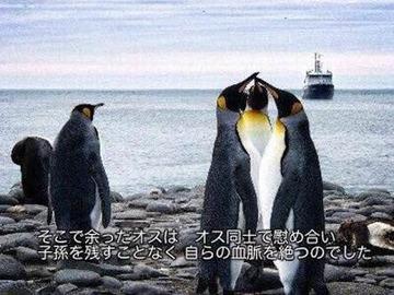 ペンギン♂