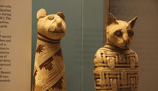 1200px-British_museum_Egypt_mummies_of_animals_4423733728