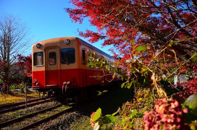 関東,ローカル線,日帰り,おすすめ,温泉,紅葉,画像