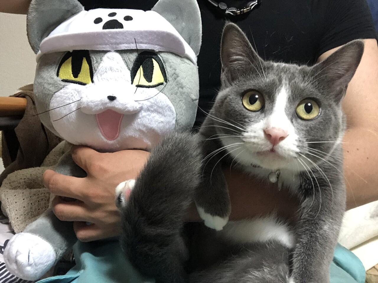 権 現場 猫 著作