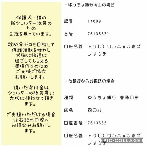 IMG_2239