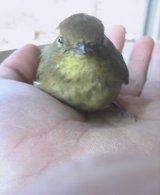 手の平の小鳥サン