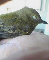 手の平の小鳥サン2