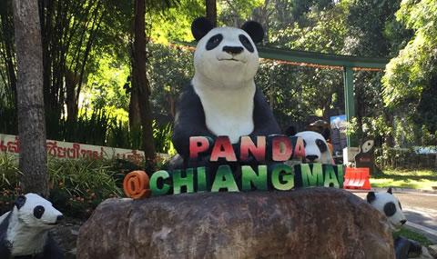 チェンマイ動物園パンダ01