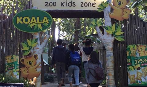 チェンマイ動物園コアラ