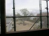 バルコニーから見える公園のシンボルツリー