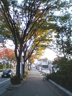 私の見た秋。
