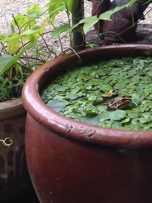 カエルは縁起が良い。