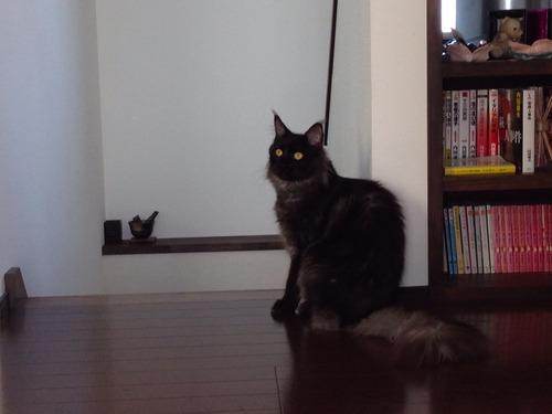 猫さん×2。