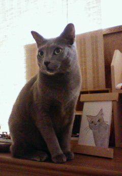 華麗なる猫。