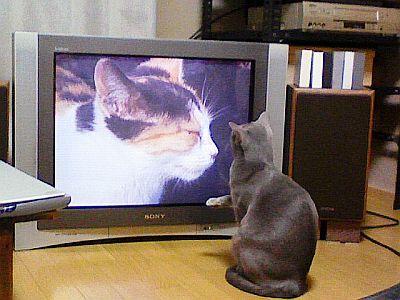 猫パンチ寸前。