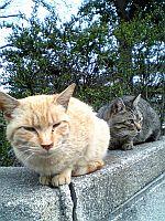 天保山の猫。