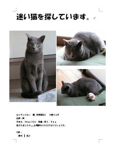 朔、迷い猫を体験するの巻。