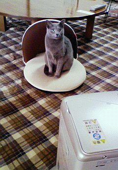 だって猫だし。
