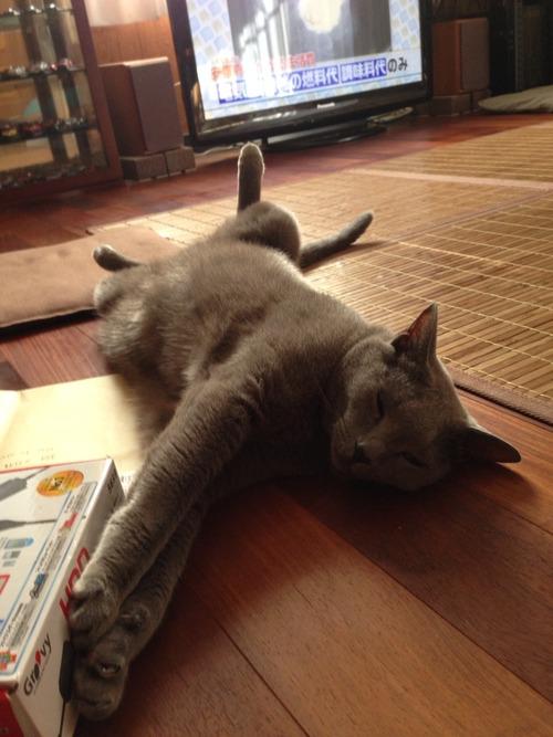 吾輩はエアコン嫌いな猫である。