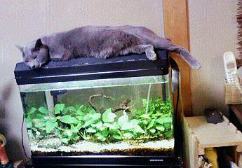 猫セラピー。