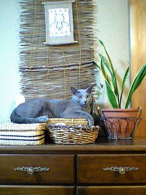 アジアンな猫の置物。