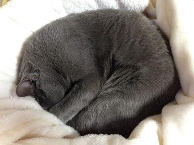 灰色の猫に。