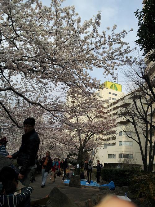 高田馬場桜「