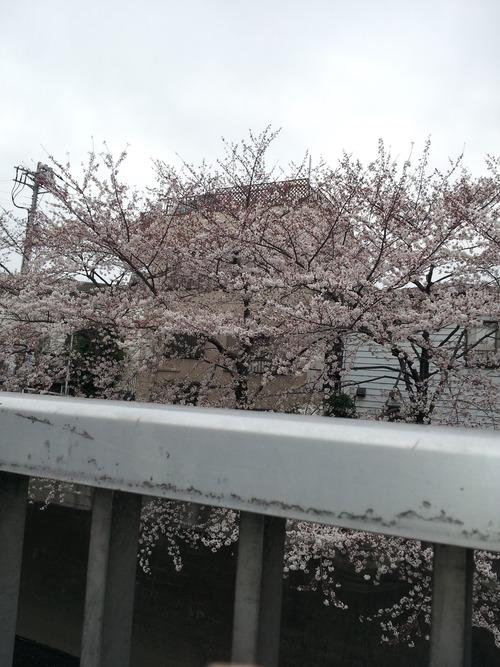 高田馬場桜3