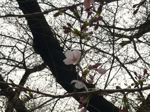 夏パンツフェアvol.1 ロロ・ピアーナのストレッチ素材、ムービング(3/31)