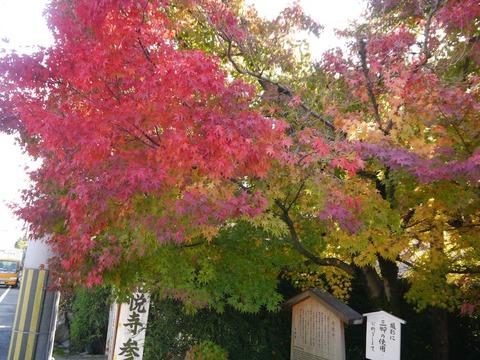 京都へ紅葉狩り(11/14)