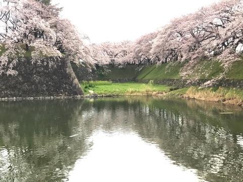 桜にはげまされて(4/7)