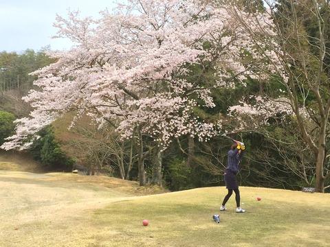 観桜ゴルフ(4/6)
