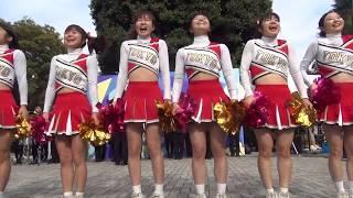 【動画】アンスコ、ドアップ!東京大学チアリーダー@駒場祭2014