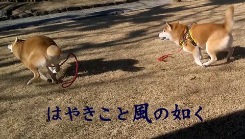 疾きこと風の如く2 (2)