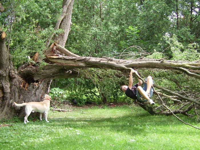 Fallen-Tree-4