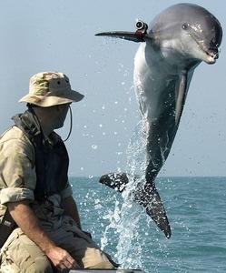 IT情報つめこみ速報|K-Dog-a-US-Navy-bottlenose-dolphin