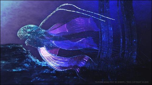 europanwhale-web-byrjt2009