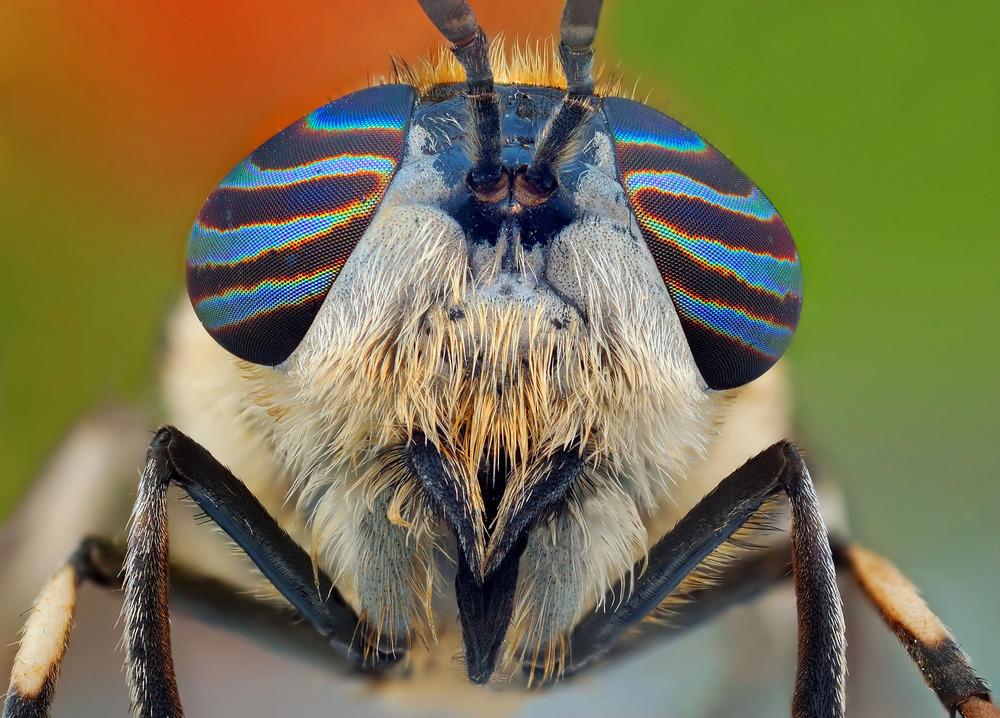 Bug-eyed_pixanews-2
